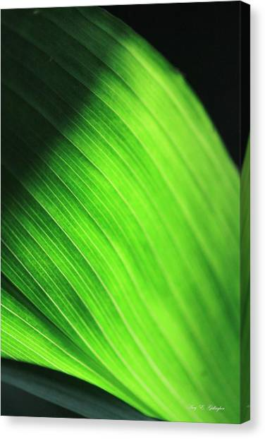 Green Wave Canvas Print