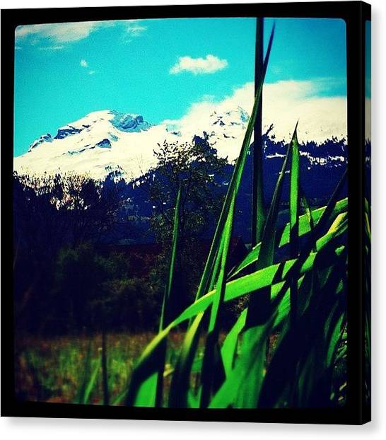Soda Canvas Print - Green With A View by Soda Love