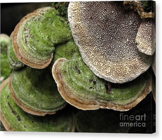 Greening Velvet Brackets Canvas Print
