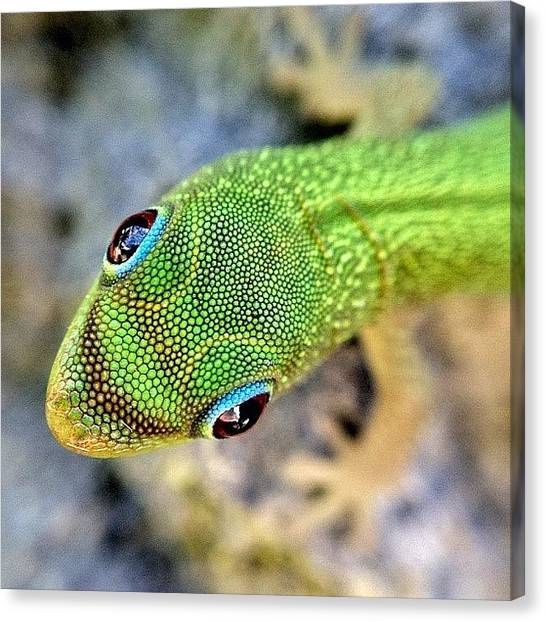 Lizards Canvas Print - Greeted By Gecko | Big Island #hawaii by Tony Macasaet