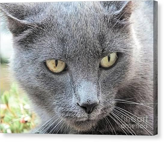 Grey Kitty 2 Canvas Print