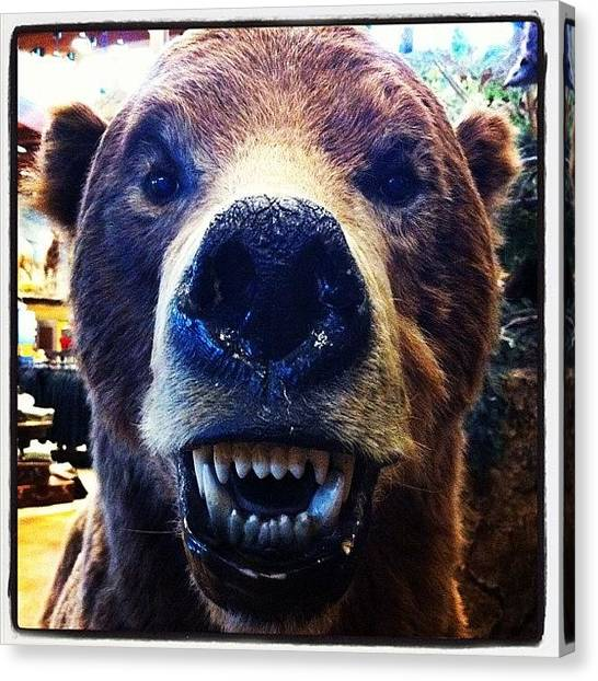 Bears Canvas Print - Grin And Bear It by Erik Jorgensen