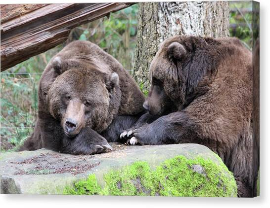 Grizzley - 0001 Canvas Print by S and S Photo