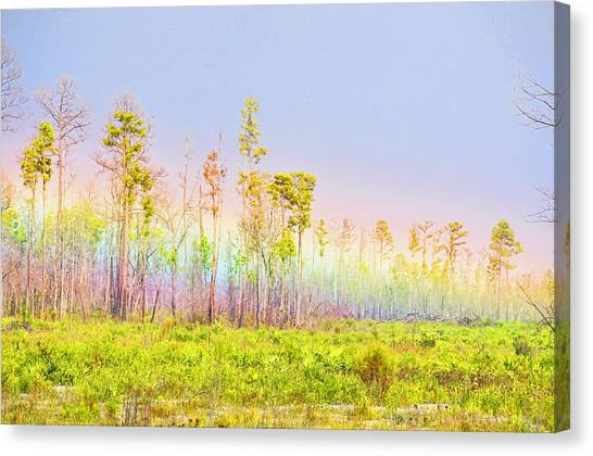 Okefenokee Canvas Print - Grounded Rainbow by Jan Amiss Photography