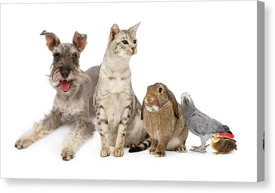 Ocicats Canvas Print - Group Of Domestic Pets  by Susan Schmitz