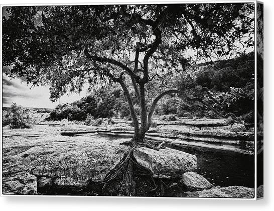 Grown Into The Rock Canvas Print