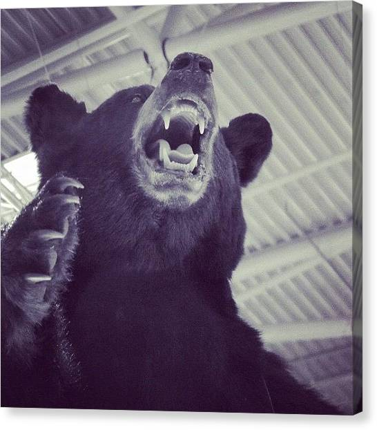 Bears Canvas Print - Grrr by Erik Jorgensen