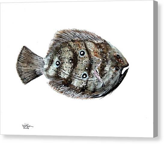 Gulf Flounder Canvas Print