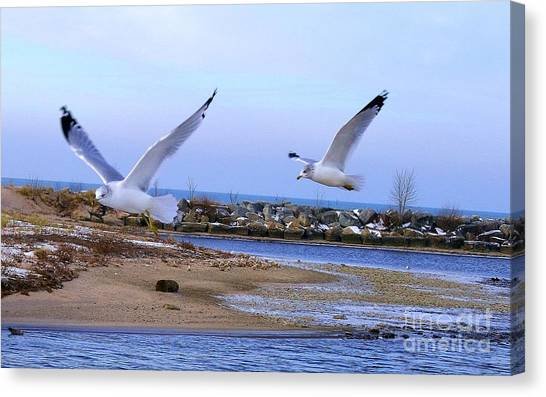 Gulls In Flight 2 Canvas Print