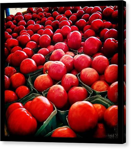 Tomato Canvas Print - Hands Off My Tomatoes!!!! Love 'em! by Molly Slater Jones