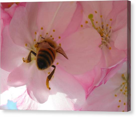 Hangin' With The Honey Bee Canvas Print by Stacy Lanyon