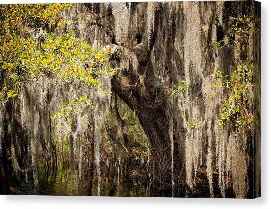 Hanging Moss Canvas Print