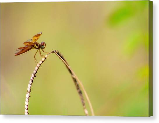 Hanging Out Canvas Print by Rita Fuller