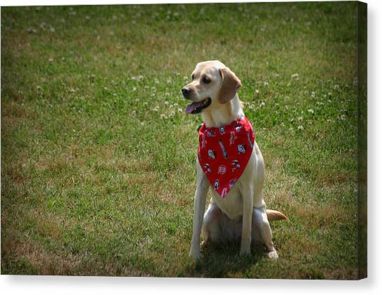 Canvas Print featuring the photograph Happy Dog by Kelly Hazel