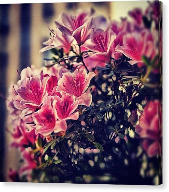 Roman Art Canvas Print - Happy #mothersday #flowers In #nyc by Roman Kruglov