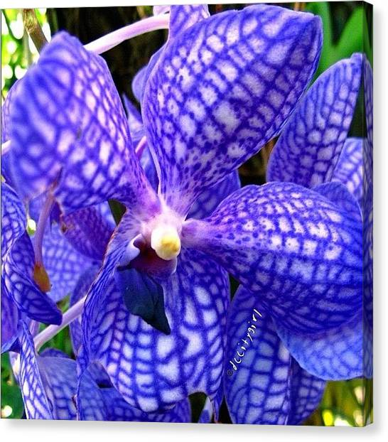 Orchids Canvas Print - Happy Sunday, Baby's Gone Back To by Dccitygirl WDC