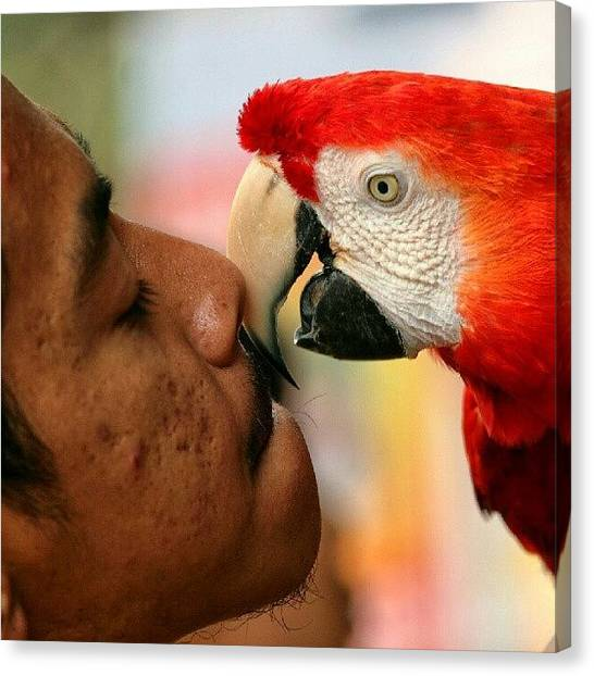 Parrots Canvas Print - Happy Trainer #kualalumpur #birdparkkl by Manan Din