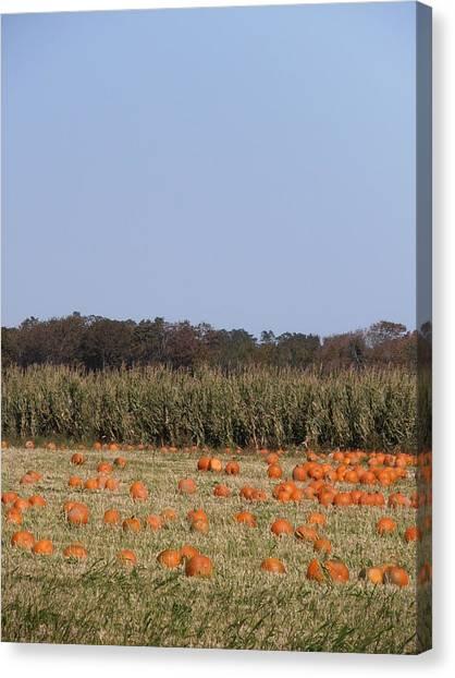 Corn Maze Canvas Print - Harbes Farm Pumpkin Patch by Kimberly Perry