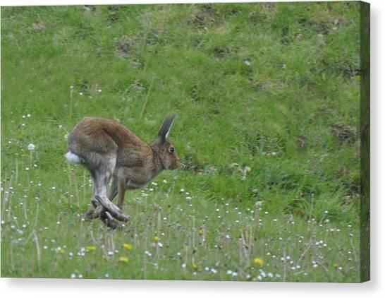 Hare I Come Canvas Print