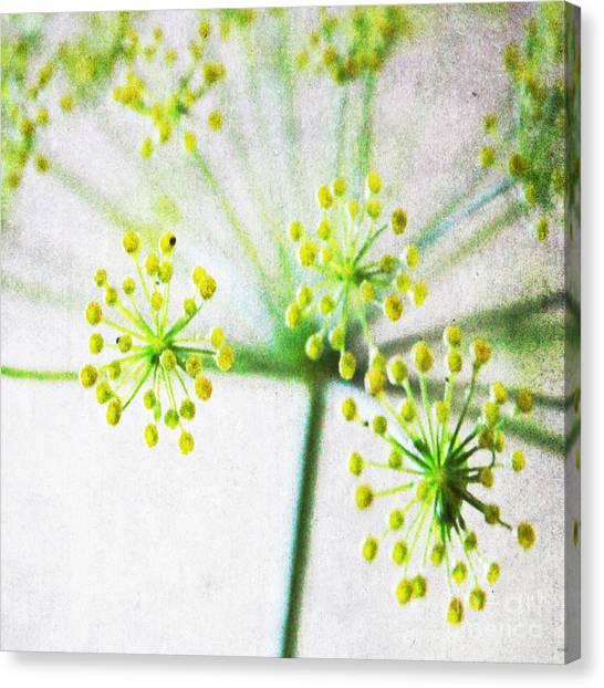Blossom Canvas Print - Harvest Starburst 1 by Linda Woods