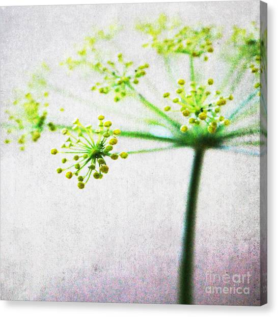 Blossom Canvas Print - Harvest Starburst 2 by Linda Woods