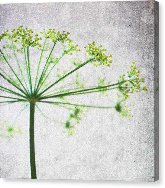 Blossom Canvas Print - Harvest Starbust 3 by Linda Woods