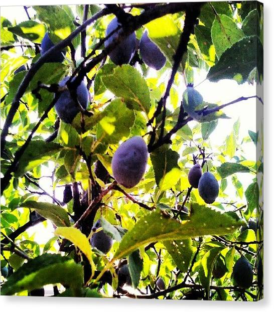 Fruit Trees Canvas Print - Harvesting #mik #csakvar #holiday by Peter Toth-Czere