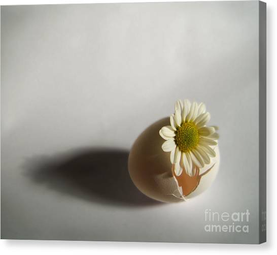 Hatching Flower Photograph Canvas Print