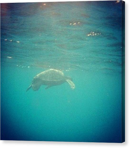 Sea Turtles Canvas Print - Hawaii Underwater by David Sabat
