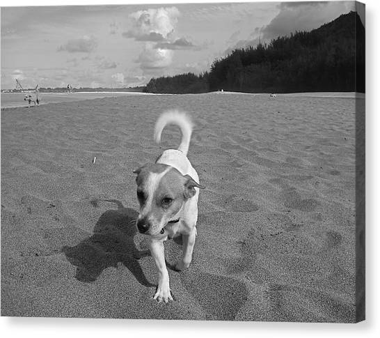 Hawaiian Beach Dog Canvas Print