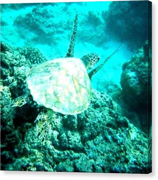 Underwater Canvas Print - Hawaiian Turtle #hawaii #turtle #sea by David Sabat