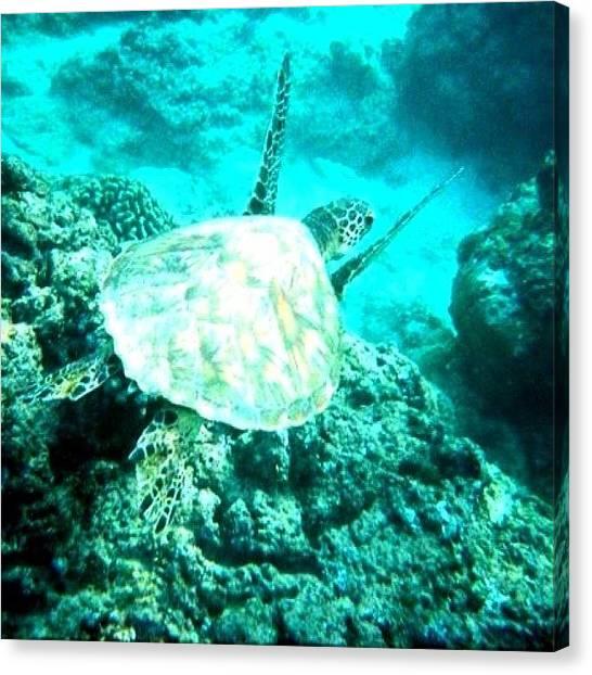 Ocean Animals Canvas Print - Hawaiian Turtle #hawaii #turtle #sea by David Sabat