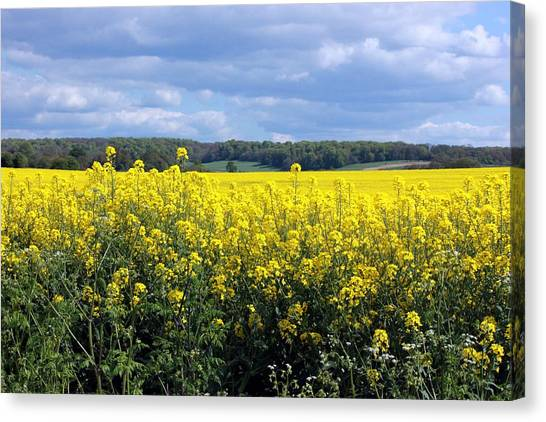 Hay Fever Canvas Print