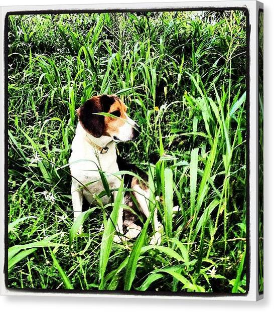 Beagles Canvas Print - He Loves Being In The Tall #green by Ivan Belvis