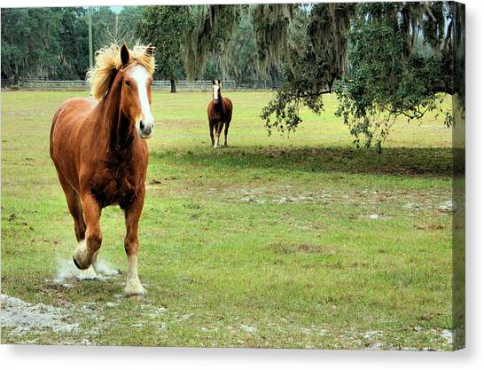 Draft Horses Canvas Print - He Was Running by Kristin Elmquist