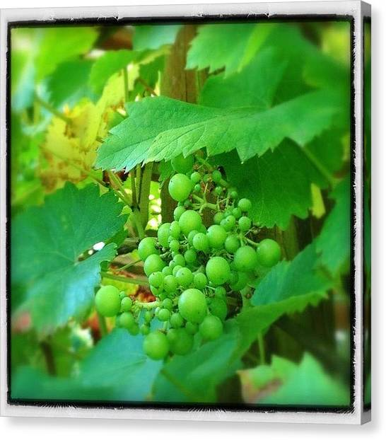 Grapes Canvas Print - Heard It Through The Grapevine #grapes by Polly Rhodes