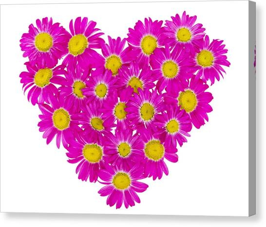 Heart From  Pink Daisies Canvas Print by Aleksandr Volkov