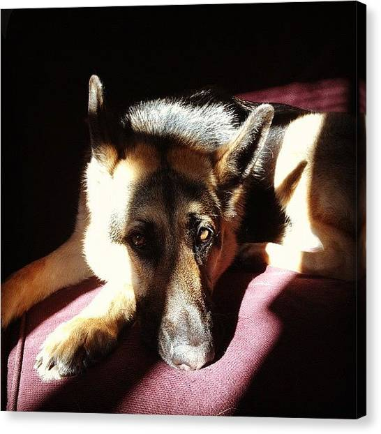 German Shepherds Canvas Print - Heidi by Kirk Lewis