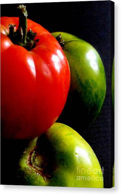 Heirloom Tomatoes Canvas Print by Maria Scarfone