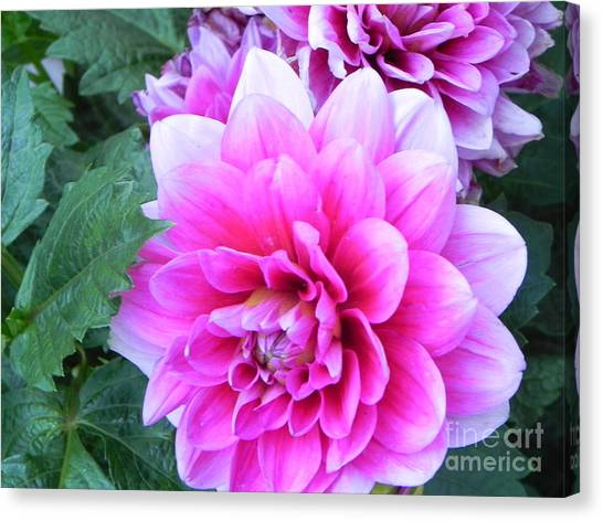 Hello Dahlia Canvas Print