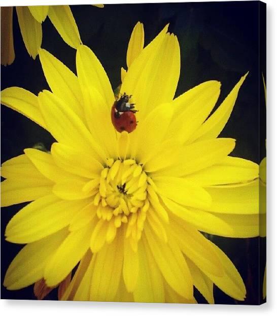 Ladybugs Canvas Print - Hello Ladybug by Lilith Bergstrom Hessmyr