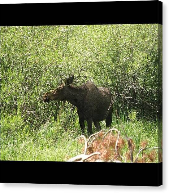 Rocky Mountains Canvas Print - Hello Laila From Colorado Springs by James Sibert