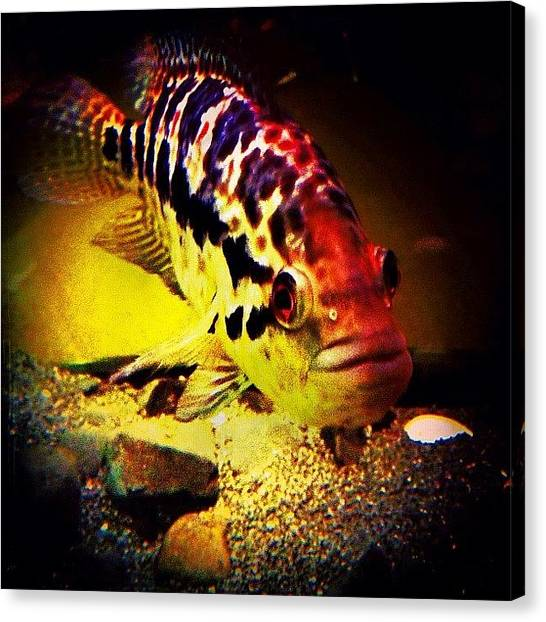 Fish Tanks Canvas Print - Hello Little Fishy 🐠🐟🐟🐠 by Avril O