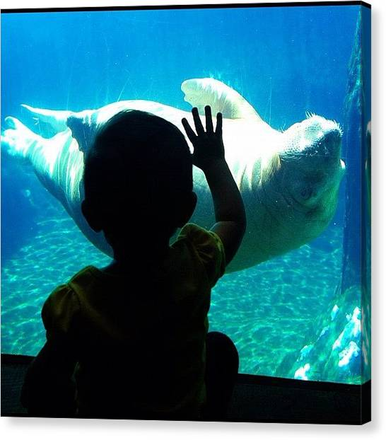 Aquariums Canvas Print - Hello Walrus by Madeleine Claire