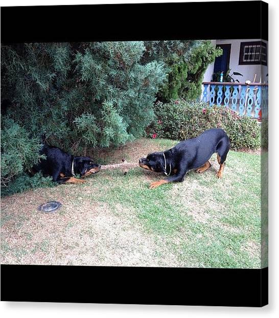 Rottweilers Canvas Print - Hera And Quick!! #funny #cute #dog by Adriana Guimaraes