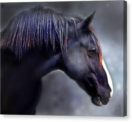 Hercules The Black Stallion Canvas Print by Dorothy Walker