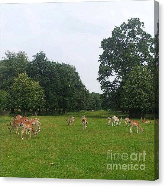 Large Mammals Canvas Print - Herd by Isabella Shores