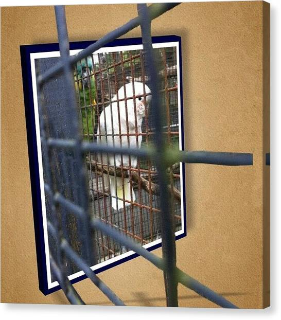 Parrots Canvas Print - Here Are A Pair Of #jailbirds, A by Victor Wong
