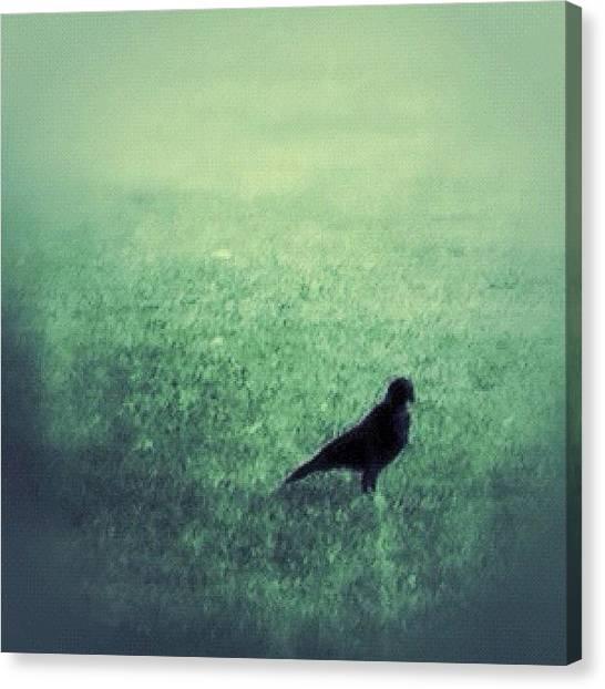 Manitoba Canvas Print - Here Birdie by Jessica Mutimer