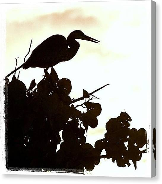 Herons Canvas Print - Heron In The Tree. #heron #bird #beak by Troy Thomas